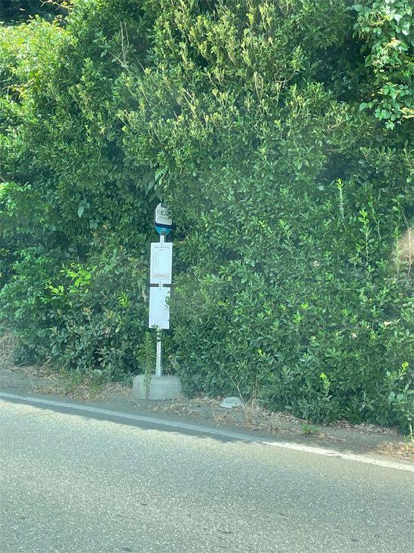 植え込みに隠れそうな国道沿いのバス停。道路端の白線の内側には人が待てるスペースはほとんど確保されていない(筆者撮影)